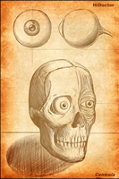 Wallpaper especial Anatomia